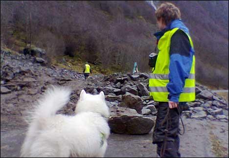 Ein lavinehund markerte eit funn fjorden måndag føremiddag. (Foto: Olaf Erlend Gundersen, NRK)