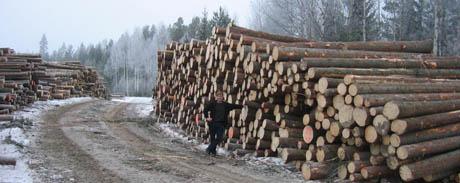 Tømmerhogst i Flesberg.