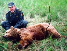 Politioverbetjent Nils Roger Duna undersøker Arvasslibinna som ble skutt i fjor sommer Foto: Politiet