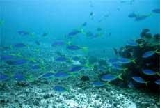 Korallrev i Det indiske hav kan være ødelagt etter flodbølgene. (Illustrasjonsfoto: AP/Scanpix)