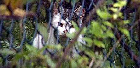 Katter kan varsle om farer.