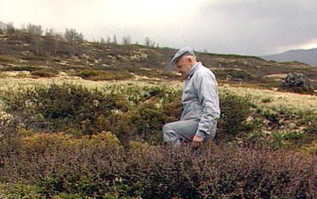 Gamal dyregrav på Hjerkinn på Dovrefjell. (Foto:NRK)