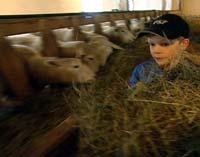 Minstemann Einar hjelper til på gården.