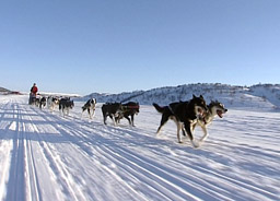 I år får Finnmarksløpet ikke skjenke øl og vin i løpskafeen. Foto:Kai Erik Bull