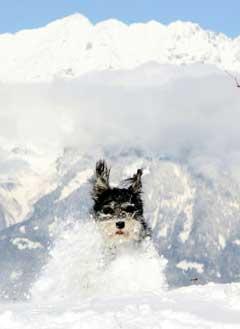 Mange liker seg i de tyrolske alper. (Foto: Reuters/Scanpix)