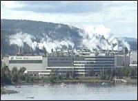Norske skog på Skogn.