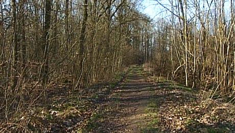 Det er i dette skogsområdet med mange turstiar leitinga skal foregå i dag. (Foto: Bernt Baltzersen, NRK)