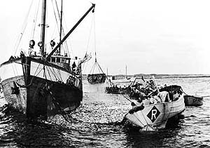 Sildefisket, slik det foregikk på 1950-tallet.