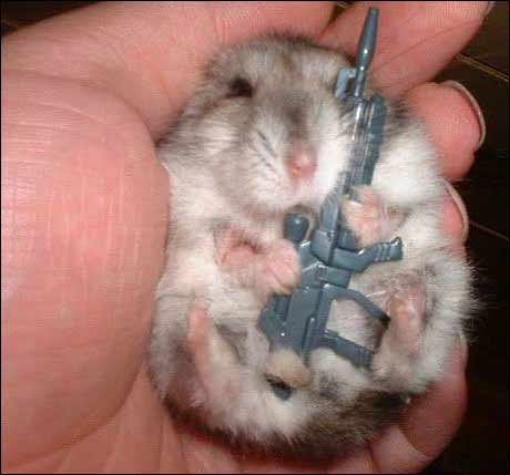 Pass opp for terrorhamstere. (Kilde: ukjent)