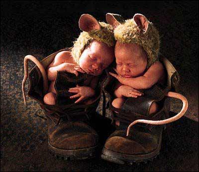 Også troll er søte når de er små. (Kilde: ukjent)