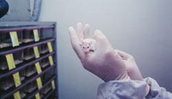 Er dyreforsøk nødvendig? Debatt i Rett på fredag. Foto: Dyrevernalliansen