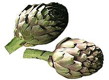 Artiskokk. Foto: Opplysningskontoret for frukt og grønnsaker