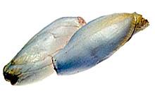 Sikori. Foto: Opplysningskontoret for frukt og grønnsaker