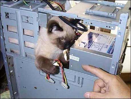 Dataproblemer? Ring Katt Support AS.