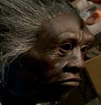 Modell av den kvinnen som man fant skjelettet av (Foto: National Geografic)