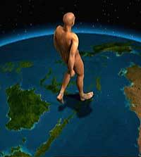 Homo erectus - The missing link (Grafikk: National Geografic)