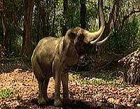 Elefantene kympet (Foto: National Geografic)