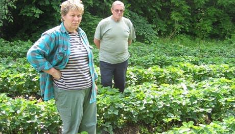 Danuta og Janucz Szymalska fra Krakow i Polen. Foto: Kate Barth-Nilsen, NRK.