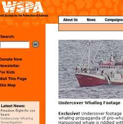 Saken er toppoppslaget på WSPAs hjemmeside i dag.