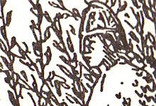 Kong Øystein. Illustrasjon: Wilhelm Wetlesen