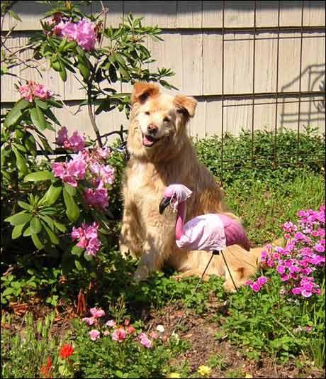 Det går rykter om at denne hunden er homofil.