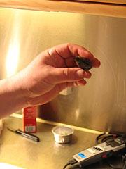 For å sjekke om blåskjellene enda lever, kan du klemme på dem. Foto: Per Kristian Johansen, NRK