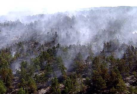 Skogeiere bærer store økonomiske tap hvis det skulle bryte ut brann. Illustrasjonsfoto: NRK