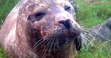 Nemo måtta avlives, mener ledelsen for Atlanterhavsparken i Ålesund