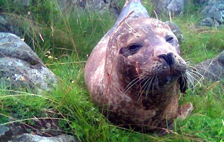 Nemo avslår tilbudet om nytt basseng (Foto: NRK)