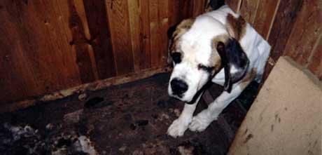 En hund sto innestengt på et lite rom i ei uke. Foto: Dyrevernnemnda