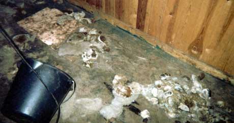 I rapporten fra den lokale dyrevernnemnda heter at det hunden vasset i møkk og oppkast. Foto: Dyrevernnemnda