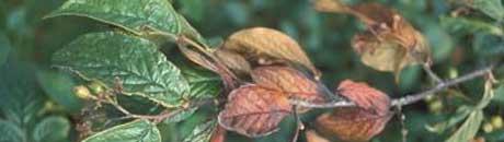 Arkivfoto: Planteforsk.