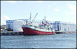 Lossing av fisk ved Bulandet fiskeindustri.