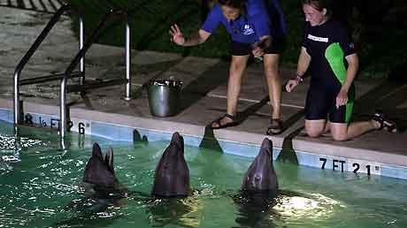 Marci Romagnoli og Ruth Calain fra Gulfport Oceanarium mater babydelfinene som ble evakuert til svømmebassenget på et hotell Foto: AP