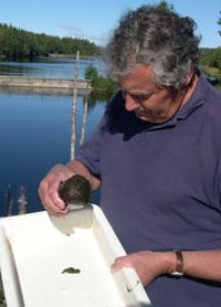 NIVA-forsker Gösta Kjellberg studerer algene han har hentet opp fra elva. Foto: Anne Næsheim/Nrk