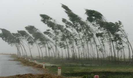 """Trær i Hua Loc på nordkysten av Vietnam bøyer seg for """"Damrey"""" (Scanpix /AP)"""