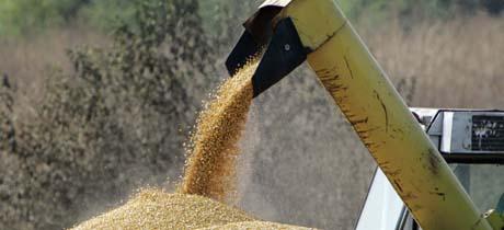 I-landenes industrielle jordbruk er vanskelig å konkurrere mot, og mottar i tillegg høye subsidier. (Foto fra USA: N.Hamik, AP)