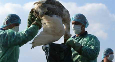 Skjærgårsdstjenesten forbereder seg nå på at trekkfugler kan bringe fugleinfluensaen til Norge. (Arkivfoto: Scanpix/REUTERS/Bogdan Cristel)