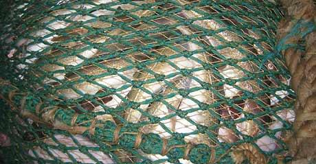 Bildet viser «tjuvnettet» inne i trålposen, men det holder ikke som bevis for russiske myndigheter. (Foto: Kystvakten/Scanpix)