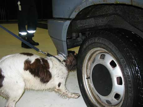 Det var en av tollvesenets hunder som sniffet seg fram til alle beslagene (Foto: Tollvesenet)