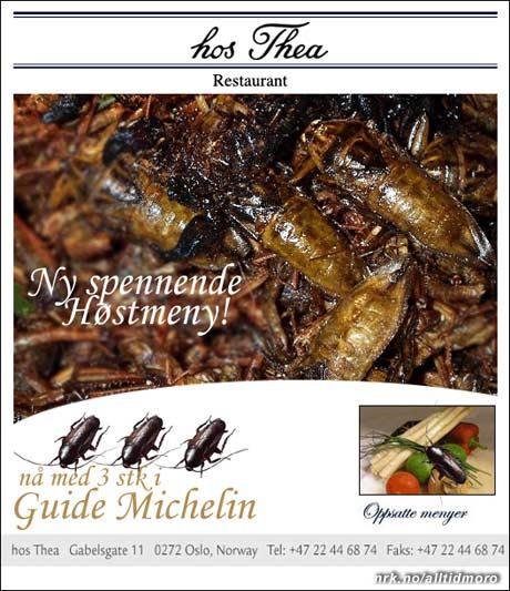 Mattilsynet har undersøkt steder som kan smykke seg med opptil flere kakerlakker i Michelin-guiden. (Innsendt av Stian Helgesen)