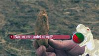Det er ulike metodar å drepa potetter på. Foto: NRK.