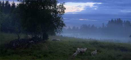 Ordføreren håper mange har lyst til å flytte til Ørje i framtiden (Foto: Håkon Mosvold Larsen / SCANPIX )