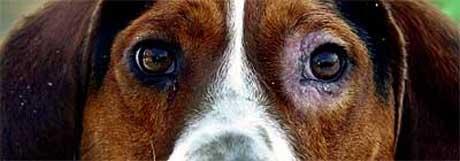 Tenk på nyttårsaften i god tid, slik at både hund og eier er forberedt.(foto: AP/Scanpix)