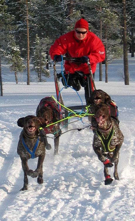 Sledehundkjøring er gøy! Foto: Trine Sørum.