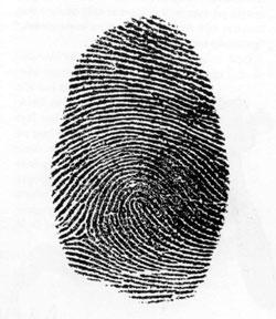 Fingeravtrykk består av 5% buer, 65% slynger og 30% virvler. Foto: H. Aschehoug & Co.