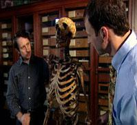 Forskerne med et rekonstruert neandertaler-skjelett. Foto: BBC