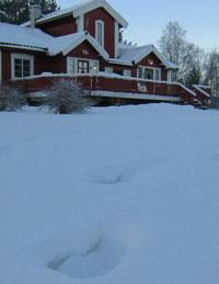 Her slo de til. Sporene etter julelys-ligaen er fortsatt tydelige rundt huset til Kari O. Austad på Tynset. Foto: Joar Elgåen, NRK