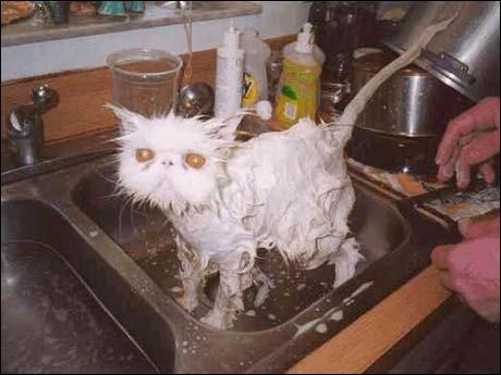 November 2006: En mann fra Sørlandet hevder han har landets reneste katt, og får være med i Norge Rundt.