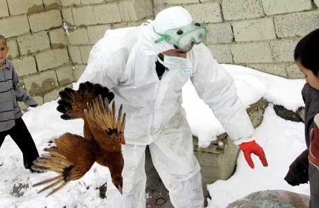 Fugler samles inn i Tyrkia. (Foto: Scanpix/AP)